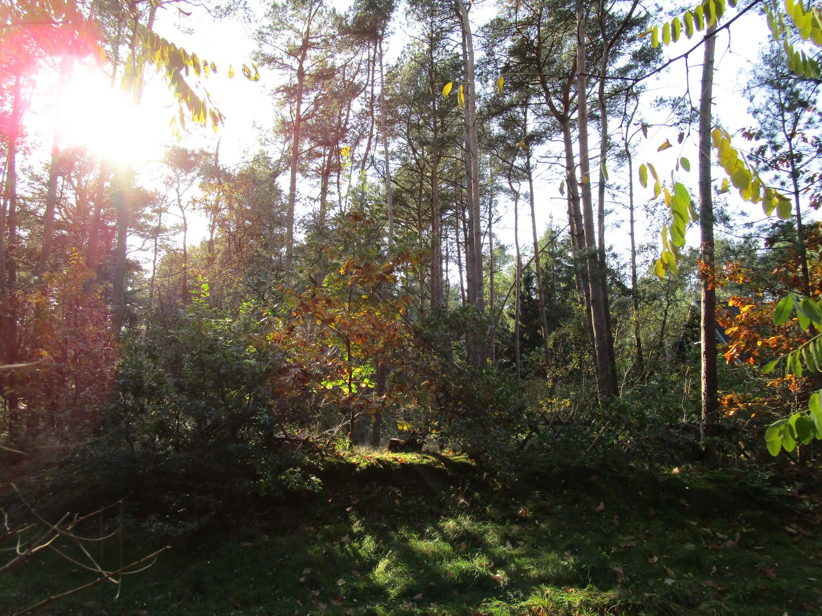 Waldgrundstück bauberater de bauberatung baubetreuung baufinanzierung